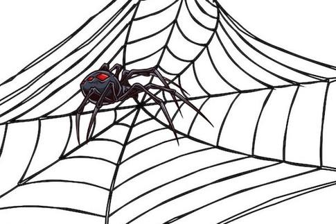 蜘蛛吐丝的秘密