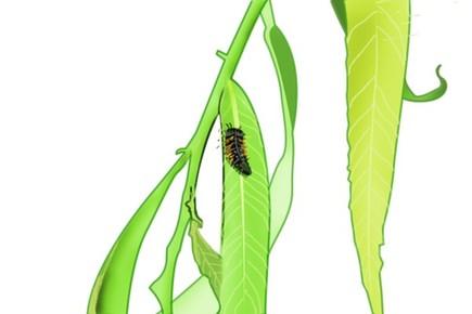 植物的抗虫之法