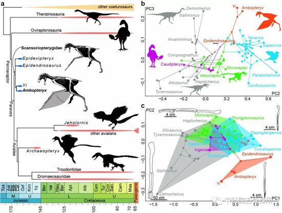 恐龙到鸟类演化历程中,竟出现大量适应飞行的尝试
