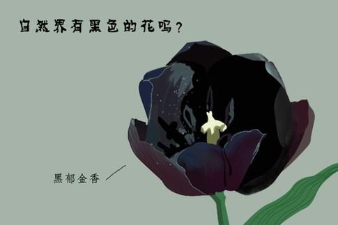 自然界有黑色的花吗?