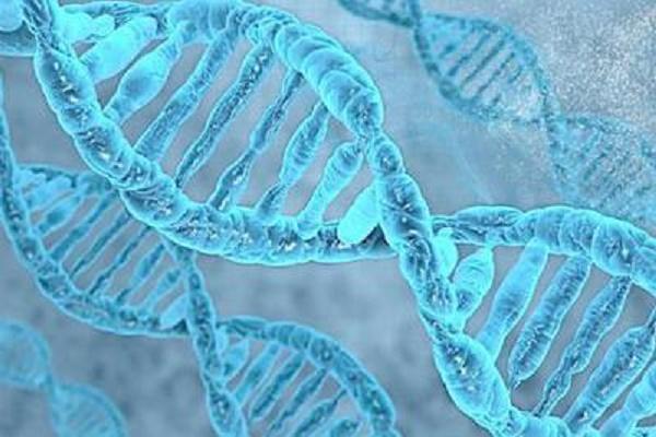 DNA读取复制研究获进展,有望找到遗传病的治疗方案