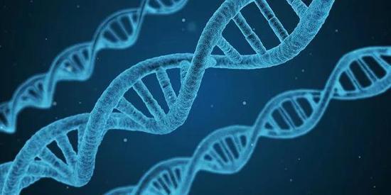 迄今最大合成基因组诞生非全部密码子构建的