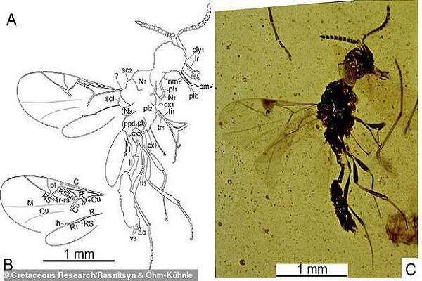 """1亿多年前的""""吸血鬼黄蜂""""竟拥有细长尖牙"""
