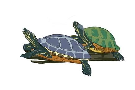 决定小海龟性别的居然是温度